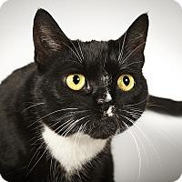 Adopt A Pet :: Candace - New York, NY