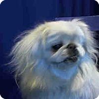 Adopt A Pet :: Nic Nic - SO CALIF, CA