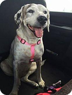 Beagle Mix Dog for adoption in Oviedo, Florida - Penny