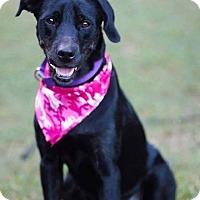 Adopt A Pet :: Jaycee in CT - East Hartford, CT
