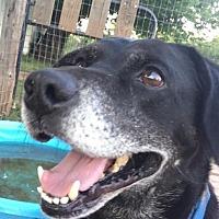 Adopt A Pet :: Benson - Natchitoches, LA
