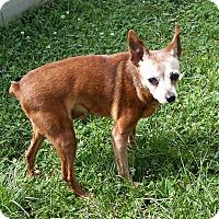 Adopt A Pet :: Frankie - Hazelwood, MO