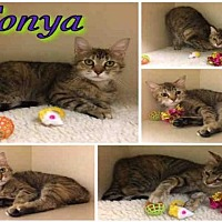 Adopt A Pet :: TONYA - Macon, GA