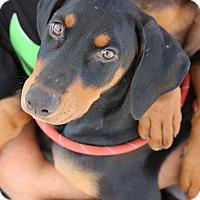 Adopt A Pet :: June - Fillmore, CA