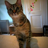 Adopt A Pet :: Elsie - FIV+ - Mansfield, OH
