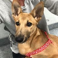 Adopt A Pet :: Kiko - Valley Stream, NY
