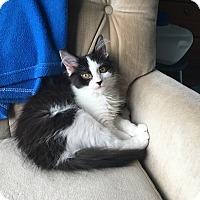 Adopt A Pet :: Jade & Bella - Roseville, MN