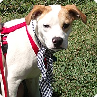 Adopt A Pet :: Lucy-ADOPTED - Somerset, KY