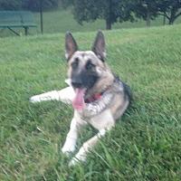 Adopt A Pet :: Summer - Morrisville, NC