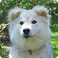 Adopt A Pet :: India - Mocksville, NC