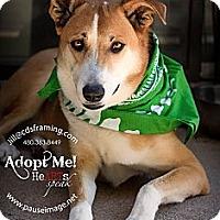 Adopt A Pet :: SHORTSTOP - Phoenix, AZ