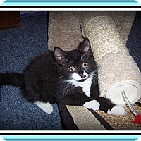 Adopt A Pet :: PEPSI - A HAPPY-GO-LUCKY BABY! - South Plainfield, NJ