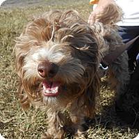 Adopt A Pet :: Luke - Lockhart, TX