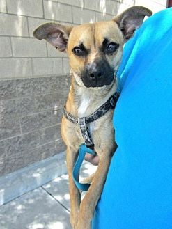 Terrier (Unknown Type, Medium) Mix Dog for adoption in Fresno, California - Buddy