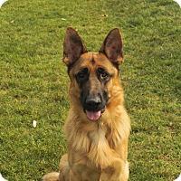Adopt A Pet :: Roman - Laguna Niguel, CA