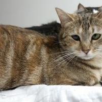 Adopt A Pet :: Bea - Erie, PA