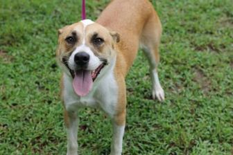 Mixed Breed (Medium) Mix Dog for adoption in Covington, Louisiana - Bronwyn (Mama)