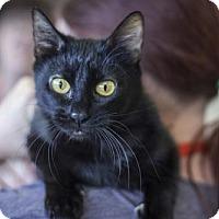 Adopt A Pet :: Little Momma - 27448 - Petaluma, CA