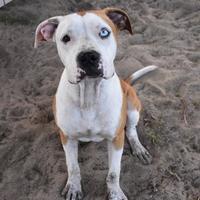 Adopt A Pet :: Stray:Independnce:08-24 - Inverness, FL
