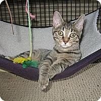 Adopt A Pet :: Romona - Acme, PA
