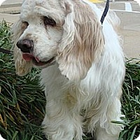 Adopt A Pet :: McCabe - Sugarland, TX