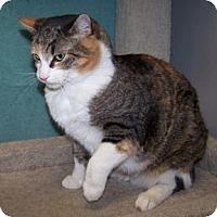 Adopt A Pet :: Gypsy - Colorado Springs, CO