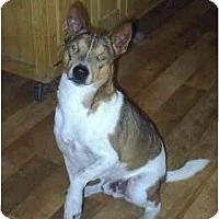 Adopt A Pet :: Diggy - cedar grove, IN