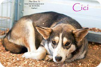 Husky Mix Dog for adoption in Orangeburg, South Carolina - Cici - Urgent
