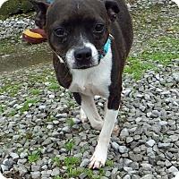 Adopt A Pet :: Tara - Franklin, KY