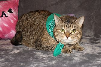 Domestic Shorthair Cat for adoption in Jackson, Mississippi - Charly