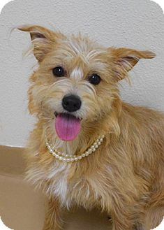 Terrier (Unknown Type, Medium) Mix Dog for adoption in Dublin, California - Tanya