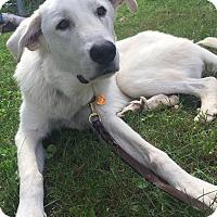 Adopt A Pet :: Merlin - Adopted! - Croydon, NH