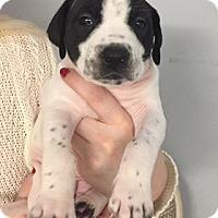 Adopt A Pet :: Pumpkin - Burlington, NJ