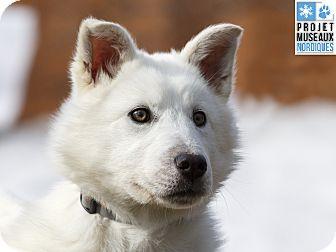 Husky Mix Dog for adoption in Ile-Perrot, Quebec - Tadum