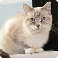 Adopt A Pet :: Angelina - Davis, CA