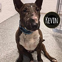 Adopt A Pet :: Kevin - Lake Worth, FL