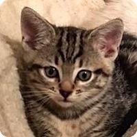 Adopt A Pet :: Molly - Palo Alto, CA