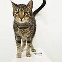 Adopt A Pet :: Momo - Balto, MD