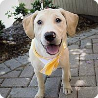 Adopt A Pet :: Neil Diamond - Sweet Caroline - Charlotte, NC