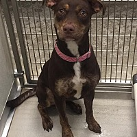 Adopt A Pet :: Shira - Humble, TX