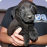Adopt A Pet :: LA PUPS D - Corona, CA