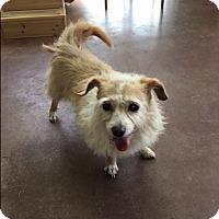 Adopt A Pet :: Zelda - Creston, CA