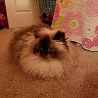 Adopt A Pet :: Harley - Ashburn, VA