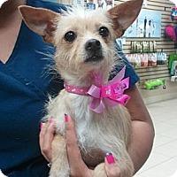 Adopt A Pet :: Skipper - Encinitas, CA