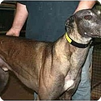 Adopt A Pet :: Pedro (Big Barn Burner) - Louisville, KY