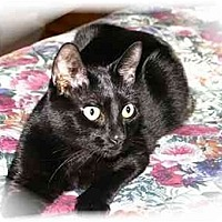 Adopt A Pet :: Panther - Montgomery, IL