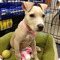 Adopt A Pet :: Lexi aka Bambi - Fort Lauderdale, FL