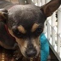 Adopt A Pet :: Sadie Frost - Reno, NV
