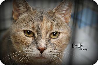 Domestic Shorthair Cat for adoption in Glen Mills, Pennsylvania - Dolly