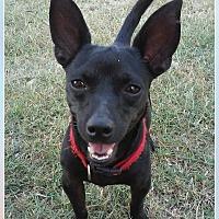 Adopt A Pet :: Bandit - Zolfo Springs, FL